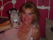 Высокое качество детских обезьян-капуцинов