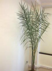 Неприхотливое растение для офиса